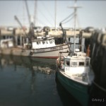 At MacMillan Pier, Provincetown MA